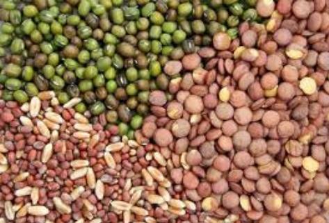 شراء Seeds For Vegetable Growing