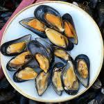 شراء Mussels