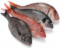 أسماك طازجة