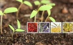 Fertilizers humic