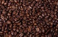 حبوب الكاكاو