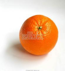 استيراد البرتقال