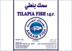 Tilapia Fish(Anaam)